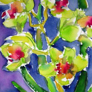gelbe orchideen shop